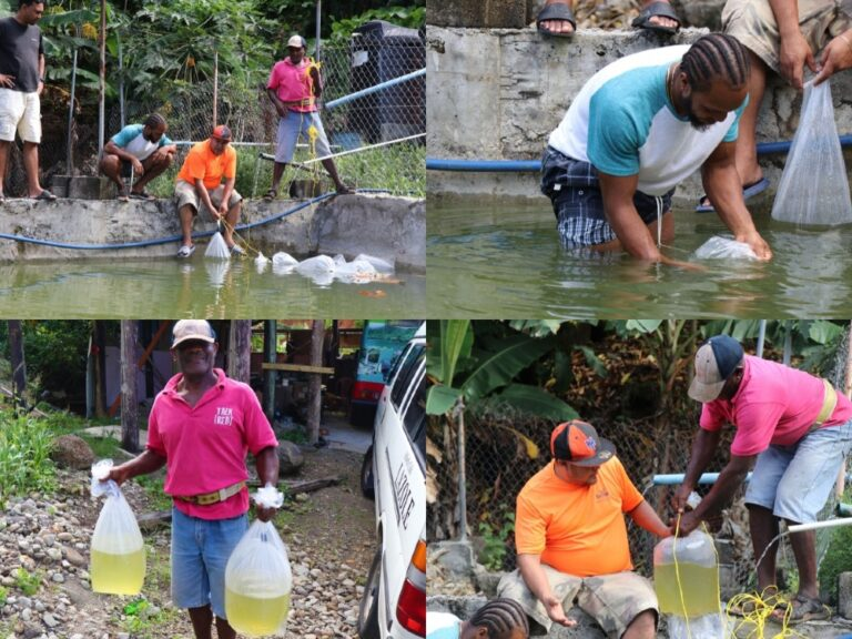 AQUACULTURE FARMING ON ISLAND MAKING SIGNIFICANT STRIDES